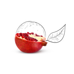Fruit composition with fresh pomegranate and cartoon cute doodle drawing elements on white background. Creative minimalistic food concept.
