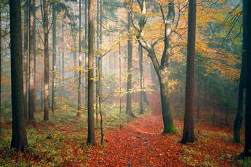 Sunny colorful autumn season fairytale forest landscape.