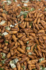 Delicious fried silkworms is one kind of Thailand street food