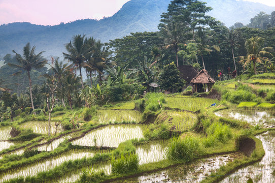 View over the rice fields near Sidemen in Bali, the most touristic island of Indonesia