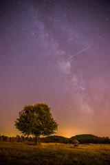 Milchstraße in der Nacht. Baum, Felder, Hügel und violetter Himmel