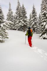 Adventurer is walking in snowshoes among huge pine trees