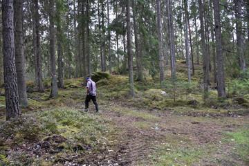 Senior walking in a coniferous forest