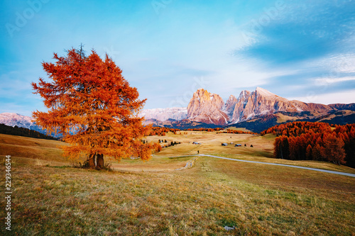 Wall mural Scenic image of bright hills. Location Seiser Alm or Alpe di Siusi, South Tyrol, Italy.