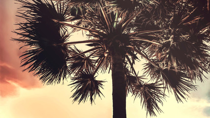 silhouettes of palm trees on the background of a clear sky, pastel toning