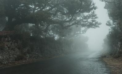 Empty foggy road on Madeira island  Fototapete
