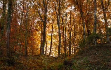 Forest. Nature. Autumn. Trees. Landscape.
