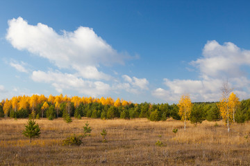 Autumn landscape. Field and forest