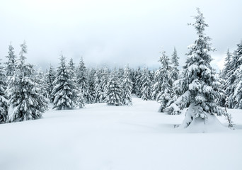snowy winter in the mountains