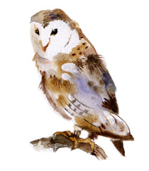 Barn owl on branch isolated on a white background, watercolor