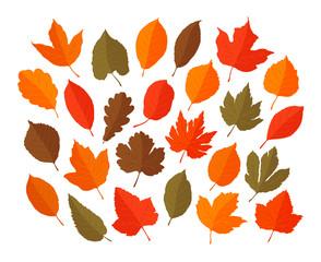 Decorative leaves, set. Autumn, leaf fall concept. Vector illustration