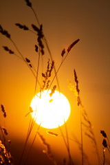 sunset with gras