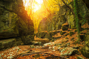 Flowing stream in canyon autumn forest