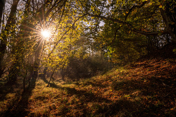Bautiful autumn sunrise in a forest