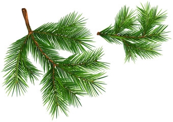 Set of Fir Branches - Detailed and Realistic Illustrations Isolated on White Background, Vector