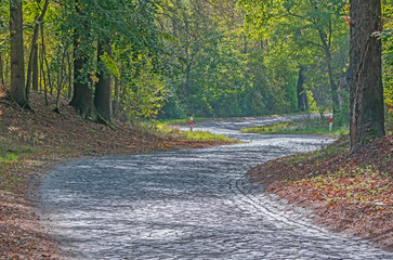 Brukowana droga przez las. - fototapety na wymiar