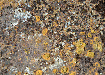 Wall Mural - rust