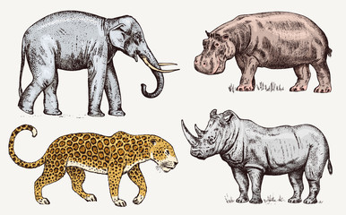 Set of African animals. Rhinoceros Elephant Hippopotamus Leopard. Engraved hand drawn Vintage old monochrome safari sketch. Vector illustration.