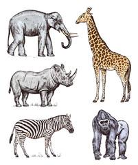 Set of African animals. Rhinoceros Elephant Giraffe Western gorilla Wild zebra. Engraved hand drawn Vintage old monochrome safari sketch. Vector illustration.