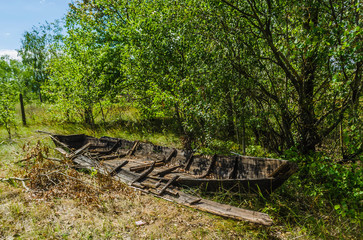 Old broken abandoned wooden fishing boat. Forest background of green trees and pines. Beached