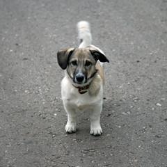 Собака/Dog