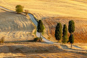 Obraz Toskańska wieś w lecie, w pobliżu Pienza, Toskania, Włochy - fototapety do salonu