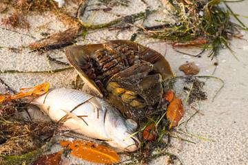 Dead sea creatures, Fort Myer, summer 2018