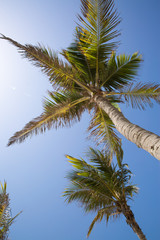 Palm tree and palm leaves, blue sky. Vacations sea and exotic beach concept.