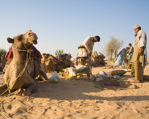 Men in desert with camels