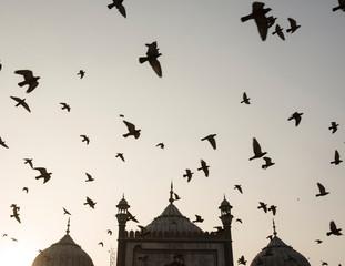 Birds flying over mosque