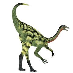 Deinocheirus Dinosaur Tail