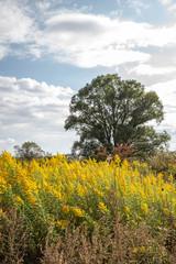 秋の河川敷の黄色い花