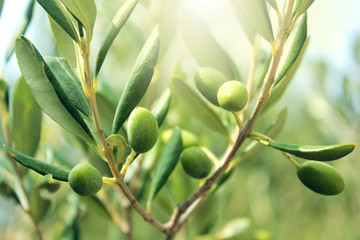 Tuinposter Aromatische Olive branch close up
