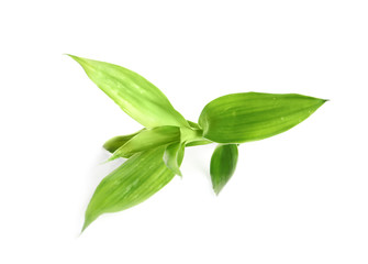 Beautiful green bamboo leaves on white background