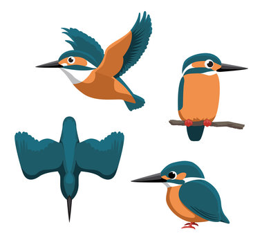 Common Kingfisher Cartoon Vector Illustration