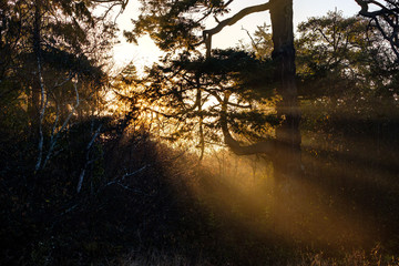 morning sun ray shine through the branches of trees with orange glow