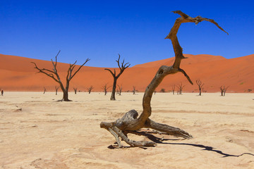 Namib Naukluft national Park / Namib Naukluft national Park - Deadwood stands at the bottom of an ancient dead lake, framed by dunes of red sand