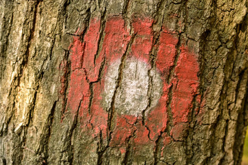 mountain trail marker on the tree bark closeup