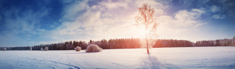 Beautiful trees in winter landscape in early morning in snowfall