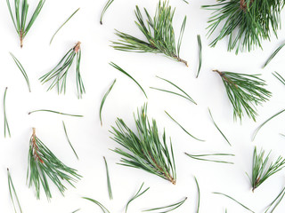 Pattern of pine needles, flat layout, top view. Wall mural