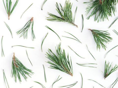 Pattern of pine needles, flat layout, top view.