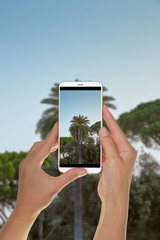 A tourist is taking a photo of palm tree on a background of blue sky on a mobile phone
