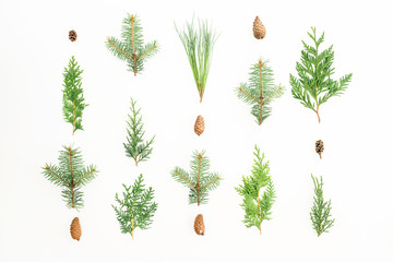 Christmas background of winter trees on white background. Christmas or New year composition. Flat lay, top view