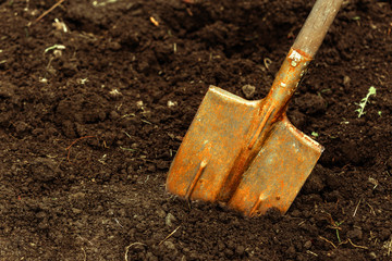 shot of digging at allotment. Close-up, Concept of gardening