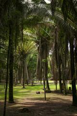 Kohunlich, Maya Ruins, Yucatan, Palm way