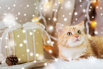 Fototapete - pets, christmas and hygge concept - red tabby cat on sofa with present at home over snow