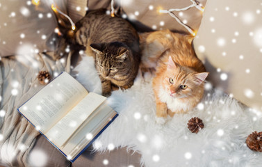 Fototapete - pets, christmas and hygge concept - two cats lying on sofa with book and sheepskin at home over snow