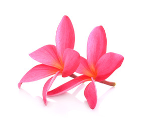 Frangipani flower  on white background.