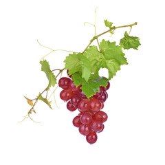 red grapes with water drops on white background.