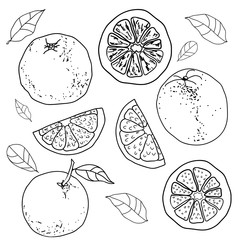 Hand drawn outline sketch style oranges